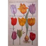 D. M. DeLaurentis Fine Antique Prints Preview